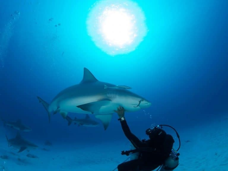 bullsharks-cancun-diving-tour-768x576