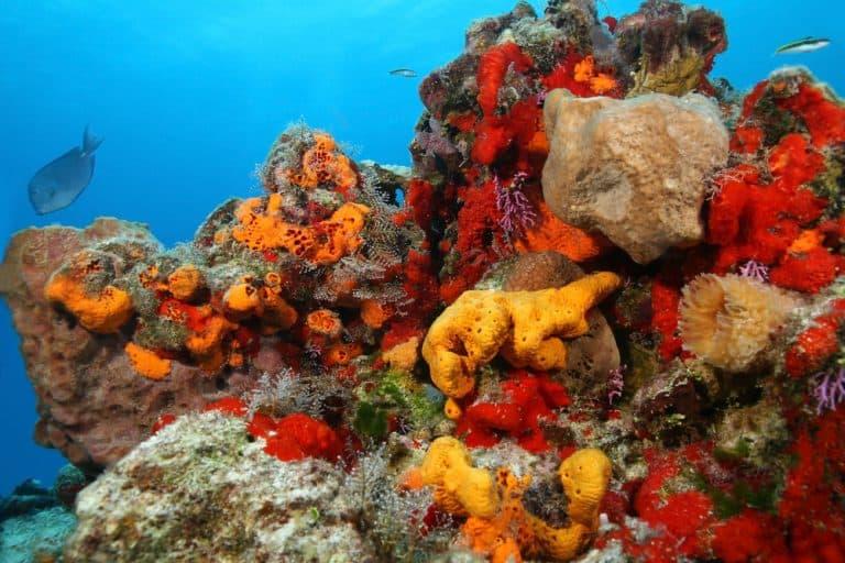 cancun-coral-reef-768x512